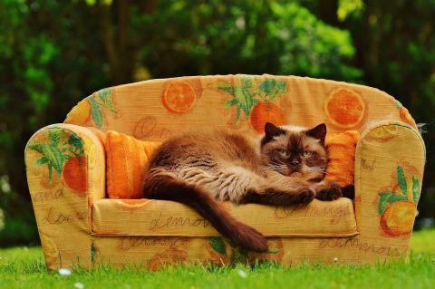 sofa online kaufen | möbelin: teak möbel, tische, stühle und, Hause deko